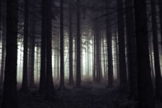 scary forest | Scary forest by jeaneta on deviantART