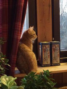 Antti ja vuodenajat. Cat with the Winters.