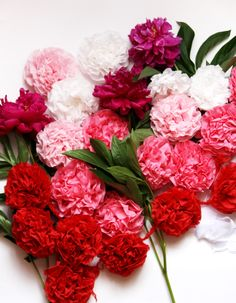 My favorite flowers are Carnations :D