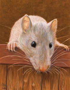 White rat by sschukina.deviantart.com
