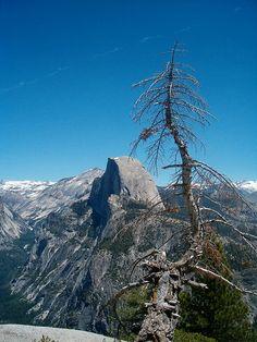 half dome and tree by Kristal Leonard, via Flickr  June 2006