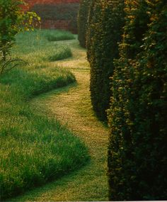 Cut grass echoes the undulating form of the hedge. Formal Gardens, Outdoor Gardens, Small Gardens, Landscape Architecture, Landscape Design, Parcs, Ornamental Grasses, Garden Spaces, Dream Garden