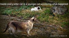 Cat Wisdom 101   Senile Cat? Who Me?