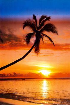 オールポスターズの「夕陽の椰子」写真