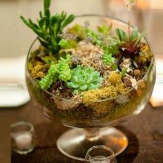 plantes-succulentes-jardin-verre-mini-mousse