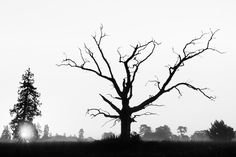 Kevin Day's Beautiful Dead Tree