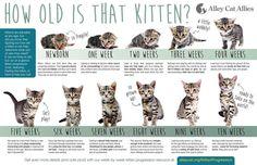 Kitten Season Is Here Kittens! Kitten Season Is Here! Kitten Growth Chart, Feeding Kittens, Feral Kittens, Cats And Kittens, Caring For Kittens, Raising Kittens, Persian Kittens, Newborn Kittens, Kittens