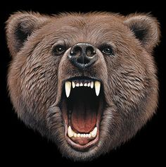bear roar - Google Търсене