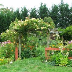Guia de jardin. Blog de jardinería y plantas. Jardín en casa.: 10 plantas trepadoras para cubrir pérgolas o cenadores