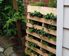 vertical garden with an old pallet