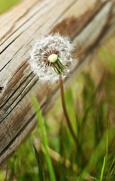 Even a weed is beautiful because it is created by God. <3