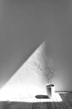 """木とともに暮らす屋内で自然を感じる""""広場""""のある家"""