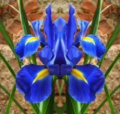 As orquídeas da Mata Atlântica como riqueza ainda mal dimensionada | Rota Mogiana