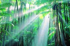 Fraser Island Rainforest by Peter Lik. Pile Valley near Central Station from memory.