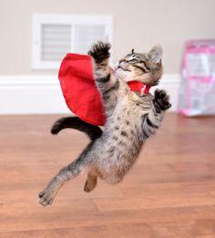 Super Cat! <3 Somewhere there's a tuna can in distress!