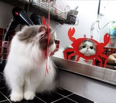 What have you done to me?  And why? #kittyhumor