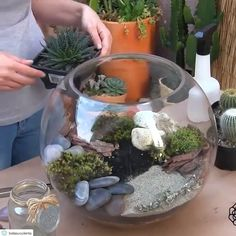 Terrarium Video Community of Succulents Cactus Plant LoversVideo Community of Succulents Cactus Plant Lovers Succulent Care, Succulent Gardening, Cacti And Succulents, Planting Succulents, Cactus Plants, Container Gardening, Indoor Gardening, Vegetable Gardening, Mini Cactus Garden