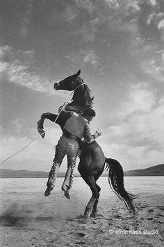 Wild Horse, The Misfits - Ernst Haas
