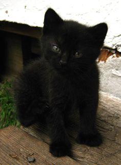 little black furball