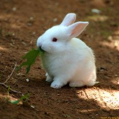 A baby bunny at the nearby Shubenacadie Wildlife Park, Nova Scotia.❤❤❤❤❤❤❤