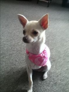Please vote for this entry in Share your cutest pet photo & be in to WIN!!