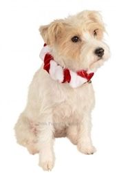 5a144afa3aa Candy Cane Collar in Red and White - Accessories - Festive Collars Posh  Puppy Boutique