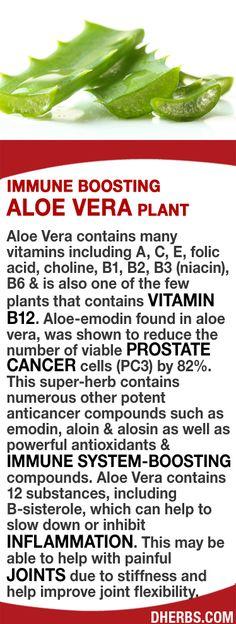 Aloe Vera contains many vitamins including A, C, E, choline, B1, B2, B3, B6 & B12. Boost your immune system!