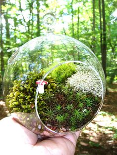 Moss Terrarium - have been seeing these on Etsy for about a year  have been very tempted to get one!  CUTE!