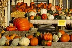 size: Photographic Print: Poster of Squash by Larry Ditto : Entertainment Produce Displays, Market Displays, Pumpkin Patch Farm, Pumpkin Display, Spring Landscape, Farm Stand, Christmas Tree Farm, Winter Scenery, Farmers Market