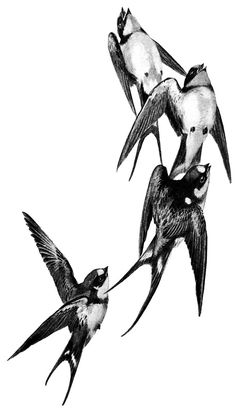The swallow is a bird that chooses a mate for life  and will only nest with that bird and no other.  Therefore a swallow tattoo is also a symbol for never ending love and loyalty to the family.  Swallow pairs travel long distances,  only to find their way back to each other at home.
