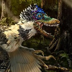 Scientists just found velociraptor's feathered Chinese cousin (Wired UK) Feathered Dinosaurs, Dinosaur Art, Extinct Animals, Prehistoric Creatures, Raptors, Scientists, Fossils, Reptiles, Feathers