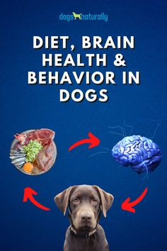 "When your dog does something wrong, what is the first thing you think of? Maybe it's … ""Oh it's just a one off,"" or ""I swear he never does this."" But have you ever considered that your dog might have a behavior problem? He might. Dr Chloe Ross believes that diet impacts dogs' brain health, cognitive abilities and behavior. Click here to see how you can improve your dog's behavior with these foods."