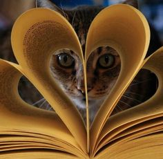 """""""I Love Books, And Cats. . ."""""""