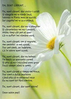 Me Quotes, Literature, Romania, Dandelion, Cat, Flowers, Plants, Dandelions, Planters