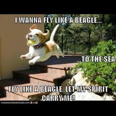 This reminds me of my Beagle Ranger!:)