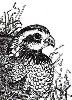 quail clipart black and white clipart station tattoo pinterest