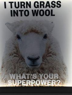 #wool #rugs #organic