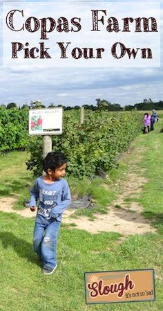 Pick Your Own at Copas Farm, Iver