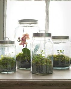 """WOODLAND TERRARIUM: """"It may be gray outside, but it's always green in these moss terrariums. We used kitchen canisters, which are readily available and inexpensive; their tight-fitting lids capture the condensation the plants require to thrive."""""""