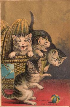 This is a fun antique advertising trade card. The card features 4 crazy frisky looking cats popping out of a wicker basket.
