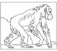 free gorilla printable coloring pages preschoolers