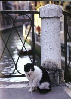 This Italian cat will show you around Venice in 12 pictures: http://www.traveling-cats.com/2018/02/cats-from-venice-italy.html (Venice photography, Venice photo ideas, Venice picture ideas)