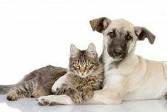 Gatti Sfondi gratuiti (1.222 foto sul desktop) per la visualizzazione di famiglia - data