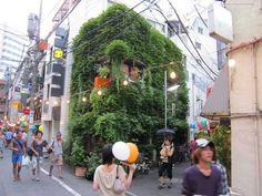 日本東京-藤蔓在夏日遮陽、在冬日保暖,不僅可降低能源需求,也讓鳥類有棲身之所。