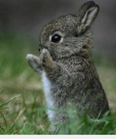 Host- give a big round of applause to Jerry The Juggler!!!      Bunny-
