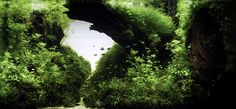 Hungarian Aquascaping Contest results are out.This is our favourite tank from 2014, by Marton Meszaros, called Broken.