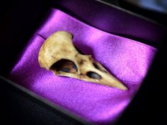 GOTHIC ODDITIES   NEW Raven Skull  Aged by GothChicAccessories, $9.50