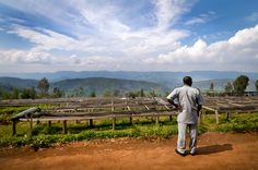 Welcome to Rwanda's #coffee land, where some of the world's best coffee is grown. Here, Minani Anastase, president of Musasa Coffee Cooperative in northern Rwanda, looks over the coffee drying tables. (Photo by  Jonathan Kalan)
