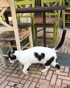 Mickey Mouse kitty #cats #catsofgreece #catsofinstagram #catsofvoula #athens #voula #greece