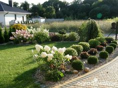 Ogrodowe przygody - Forum ogrodnicze - Ogrodowisko